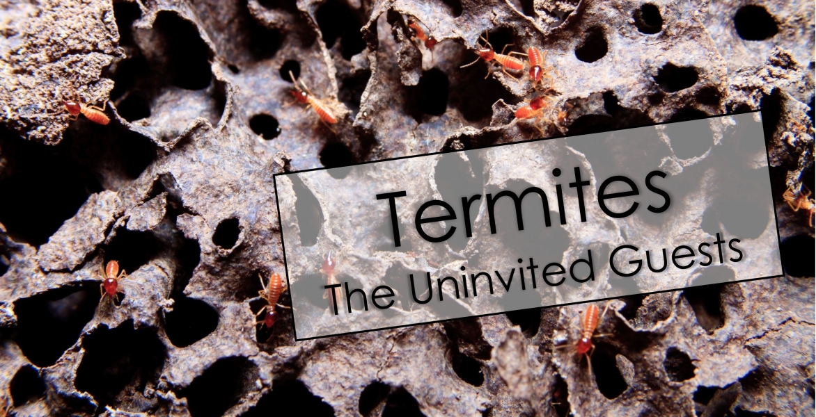 Termites - The Uninvited Guest